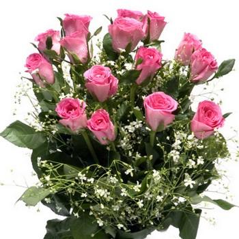 15 Fresh Pink Roses